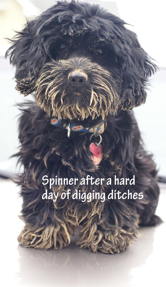 "This is Spinner, aka ""Black Bear"""
